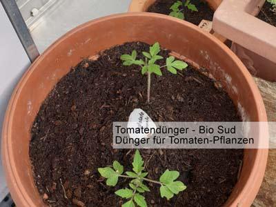 Bild bzw. Bilder von Tomaten mit Tomatendünger -a
