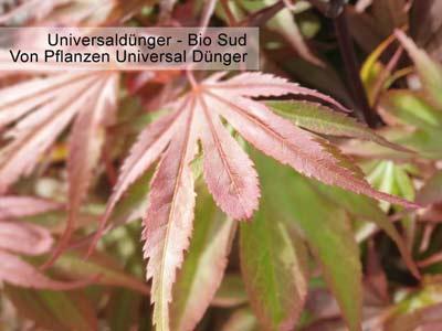 Bild oder Bilder eines mit Universaldünger / Universal-Dünger gedüngten Baumes im Frühjahr -a