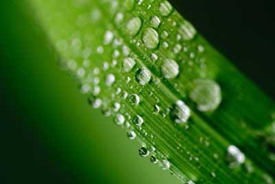 Pflanze Blatt Wasser Tropfen Anwendung Dünger Tipps und Infos