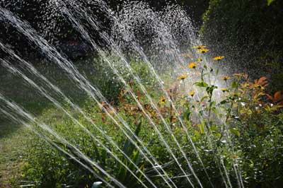 Dünger im Frühjahr: Die Pflanzen nach 2-3 Wochen düngen und gut wässern.