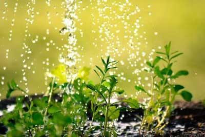 Junge Pflanzen im Frühling - Aussaat, Besatz und Düngen
