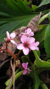 Bild bzw. Dünger Bilder von Pflanzen