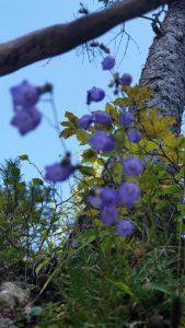 Pflanzen Dünger im Frühjahr nutzen!
