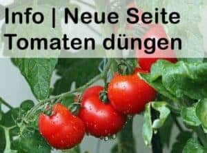 Tomaten düngen mit Bio Sud Dünger!