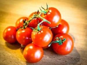 Tomate Tomaten düngen mt Dünger