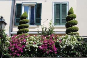Terrasse u. Balkon gestalten - mit Pflanzen und Blumen ein leichtes.