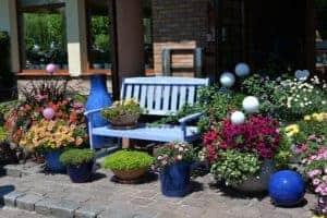 Für die Terrasse oder Balkon - Auch winterharte Pflanze benötigen ihren Kübel / Topf!