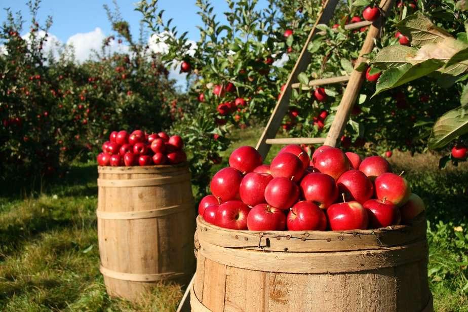 7 Tipps für den Start Ihres eigenen Bio-Gartens