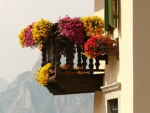 Auf dem Balkon viele Pflanzen - kein Problem!